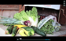 Community Assisted Agriculture in the Durham Region