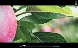 Apple Innovation in Durham Region