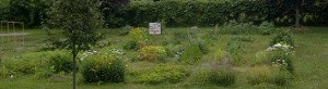 Orillia Community Gardens Website Banner