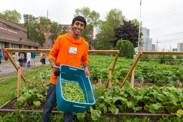 Hands on Educator Training at the Bendale Market Garden, Toronto's first urban farm on school grounds. Credit: Laura Berman/GreenFuse Photography.